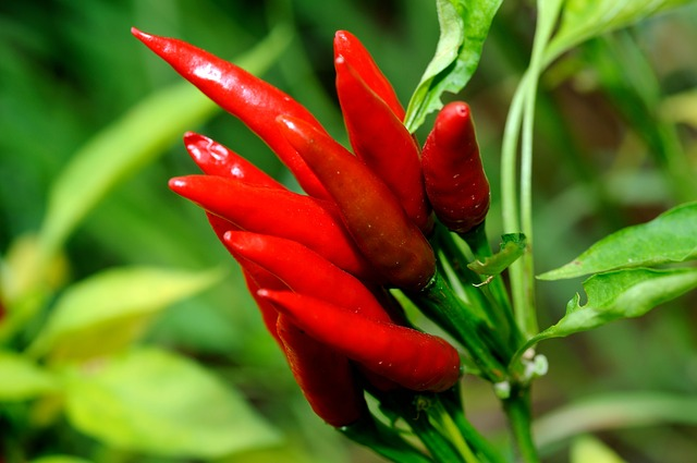 what is benefits of chili for health
