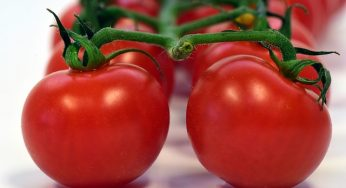 What is benefits of tomato for health?