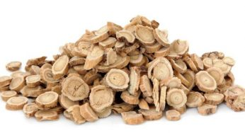 Astragalus root: benefits and how to use