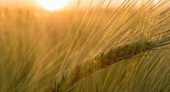 What are benefits of barley for health?
