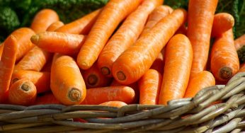 Benefits of carrot for eye health you need to know