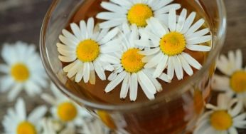 Chamomile Flower: Benefits and Side effects