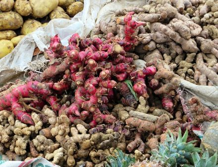 benefits of red ginger for health